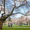 IB入試で受験できる人気の国内大学ランキング