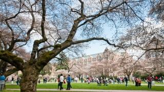IB入試で受験できる国内大学ランキング